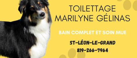 Toilettage Marilyne Gélinas
